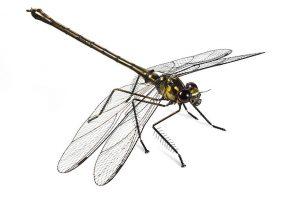 क्या कीड़े-मकोड़ों को दर्द होता है?