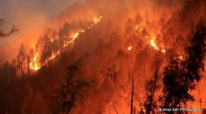 जंगल, आग और हम